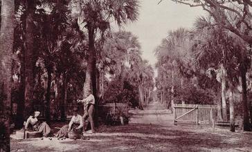 A_Palmetto_Glade_Near_Palatka__Florida.jpg