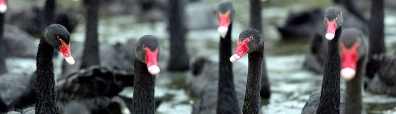 Markets In The Corona Virus Crisis - Two Swans Concluded