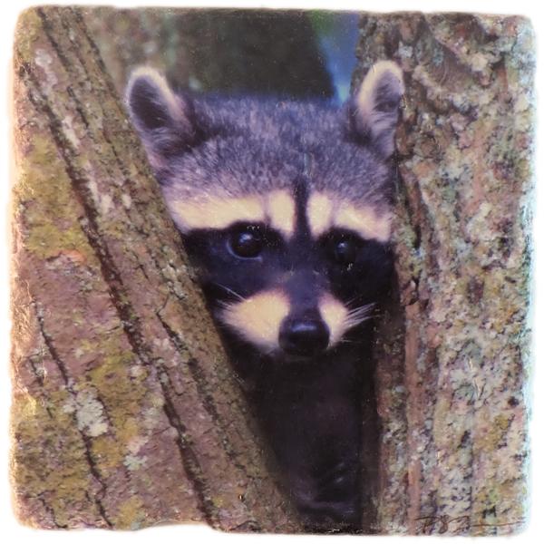 Marble Art Coaster - Raccoon