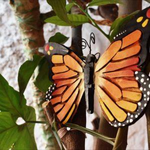 Monarch Butterfly DIY kit