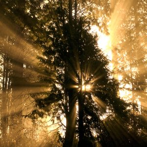 Sunbeams in the morning, Sepia Photograph