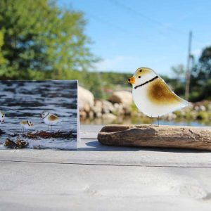Glass Piping Plover and Greetings Card