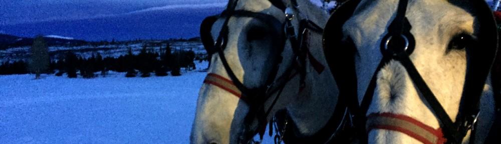 A Night Under the Stars- Winter Dinner Sleigh Ride with 2 Below Zero