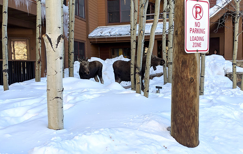 VIP Visitors at the Springs Condos Last Week in Keystone