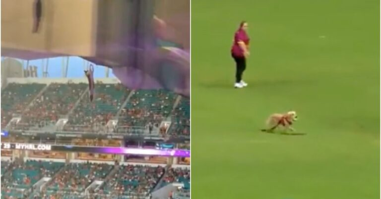 The falling Miami cat and this Cricket dog had the best sports weekend ever