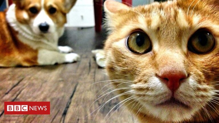 Covid: South Korea launches test for pet cats and dogs