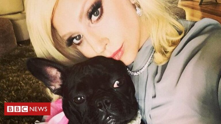 Lady Gaga's dog walker Ryan Fischer to make 'full recovery'