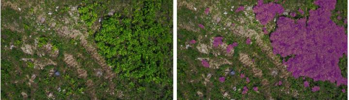 Using AI and drones as the basis for a new monitoring system for agricultural applications
