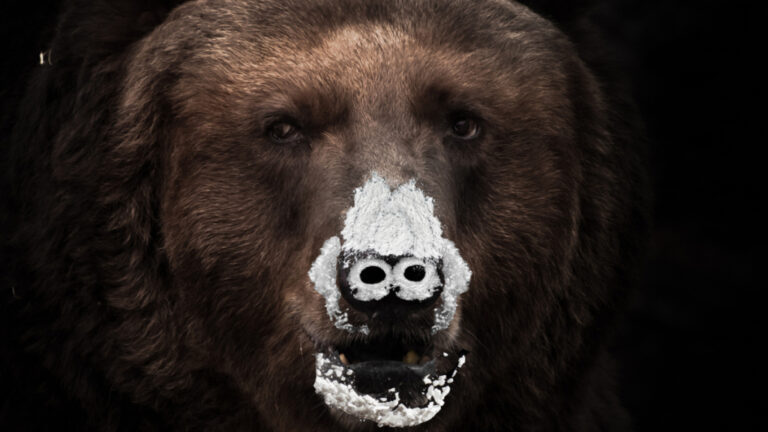 New Film Titled 'Cocaine Bear' Is Based On A True Story