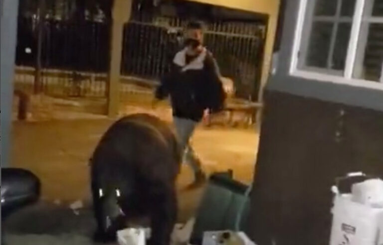 Watch: Drunk Hotel Guest Unknowingly Walks Right Into A Bear