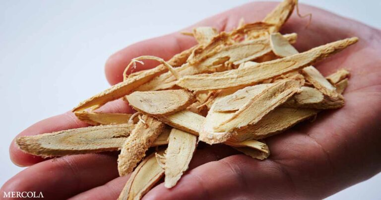 Astragalus Root Found to Work Against Sepsis