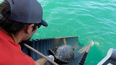 Texas sea turtles released back into sea after cold front eases