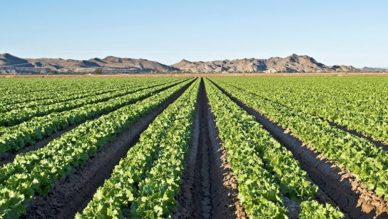 Feds plan to begin testing research program with romaine lettuce in Arizona