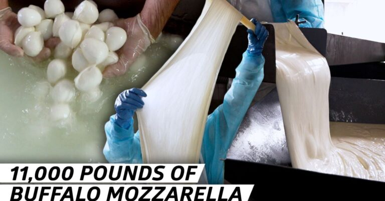 How Buffalo Mozzarella is Made at a Farm and Factory in Italy