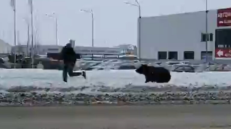 Russian Chased By Bear In Front of KIA Dealership