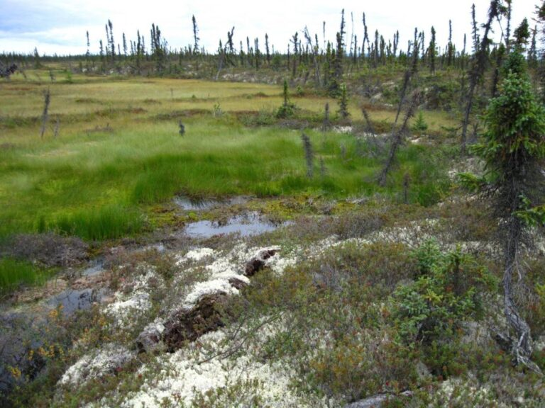 Permafrost carbon feedbacks threaten global climate goals – Watts Up With That?