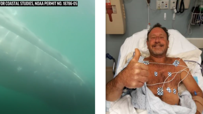 Humpback Whale Nearly Swallows Lobster Diver Off Massachusetts Coast