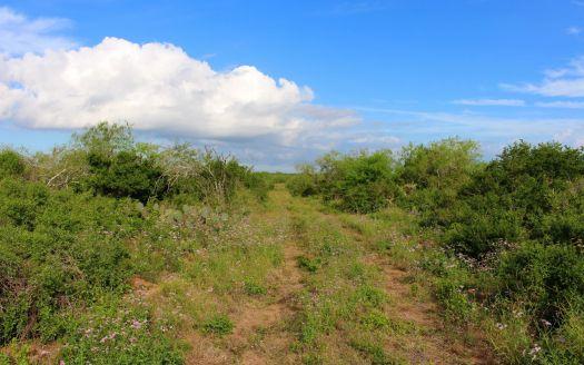 239 Acres Duval County, San Diego, TX