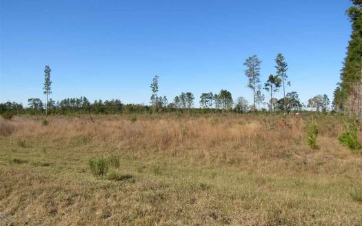 Vacant Ne Loblolly Trl, Lee, FL
