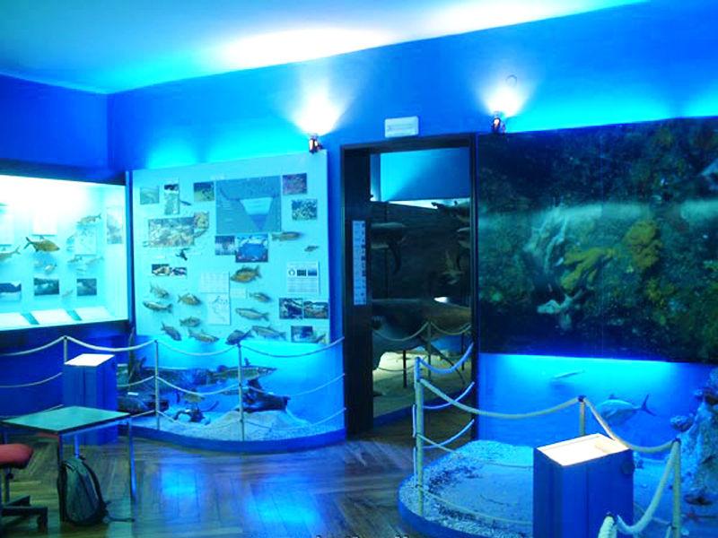 Музей естественной истории, Загреб