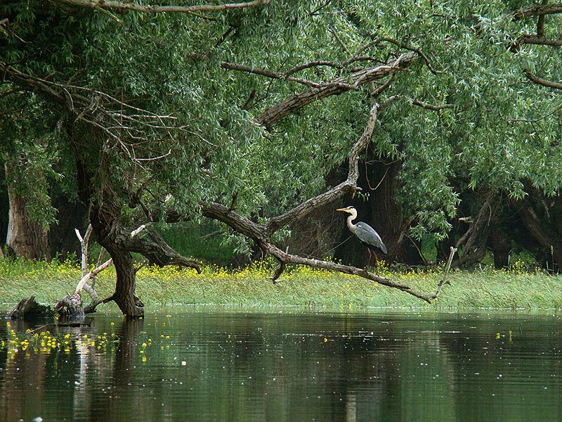 Природный парк «Копачки Рит»