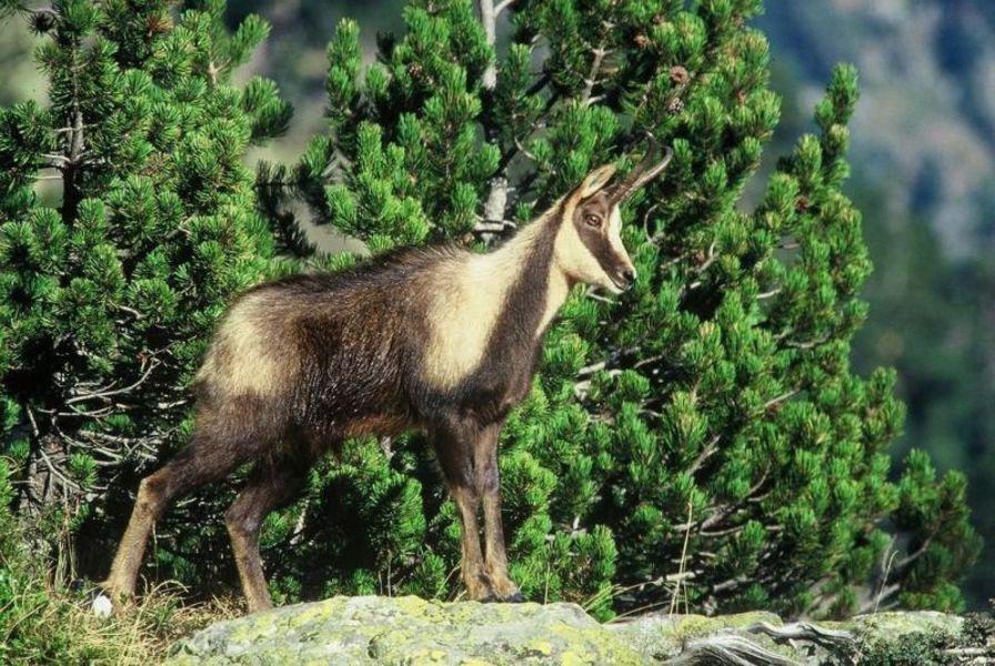 Национальный парк Пиренеев