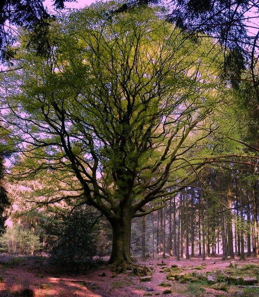 Лес де Пемпон