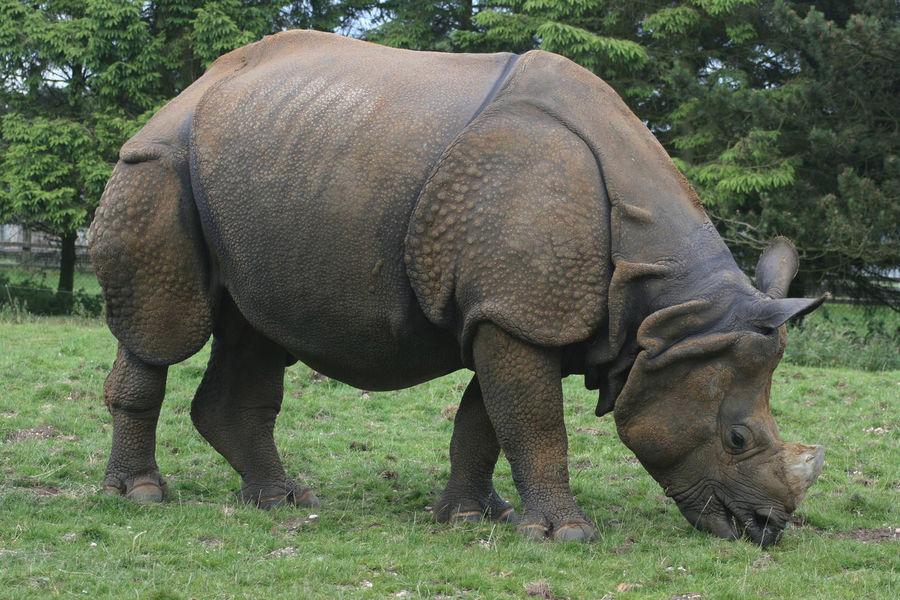 Уипснейдский парк диких животных