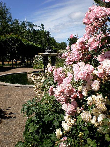 Парк розы