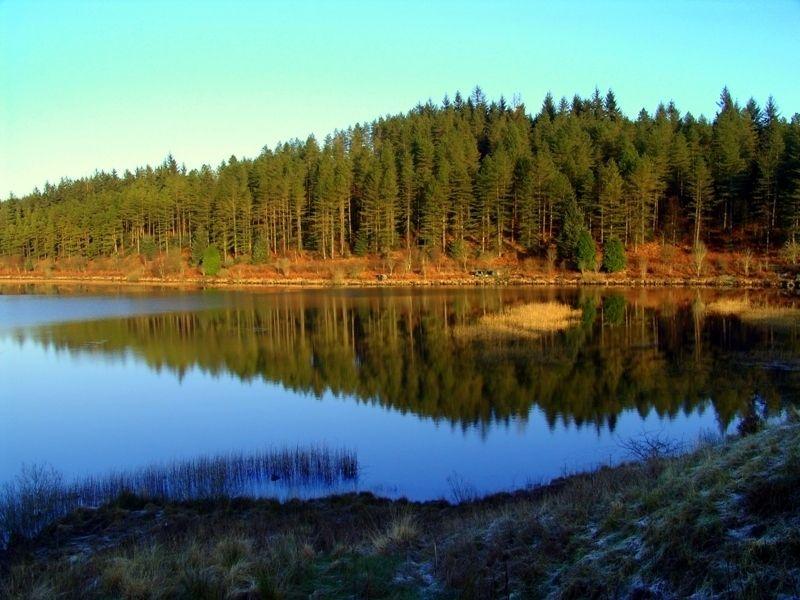 Лесной парк Галлоуэй