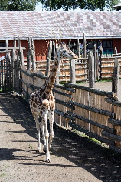 Зоопарк Кристиансанна