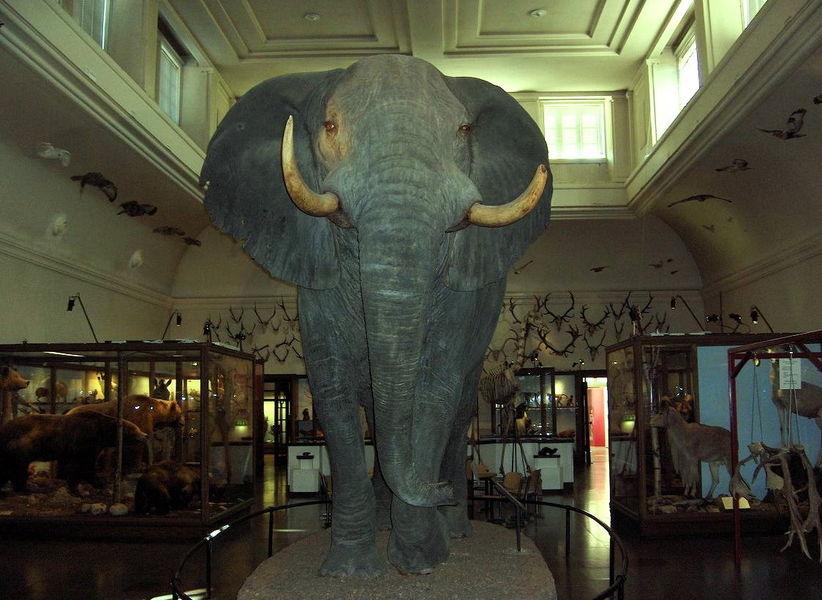 Слотскоген и Музей естествознания