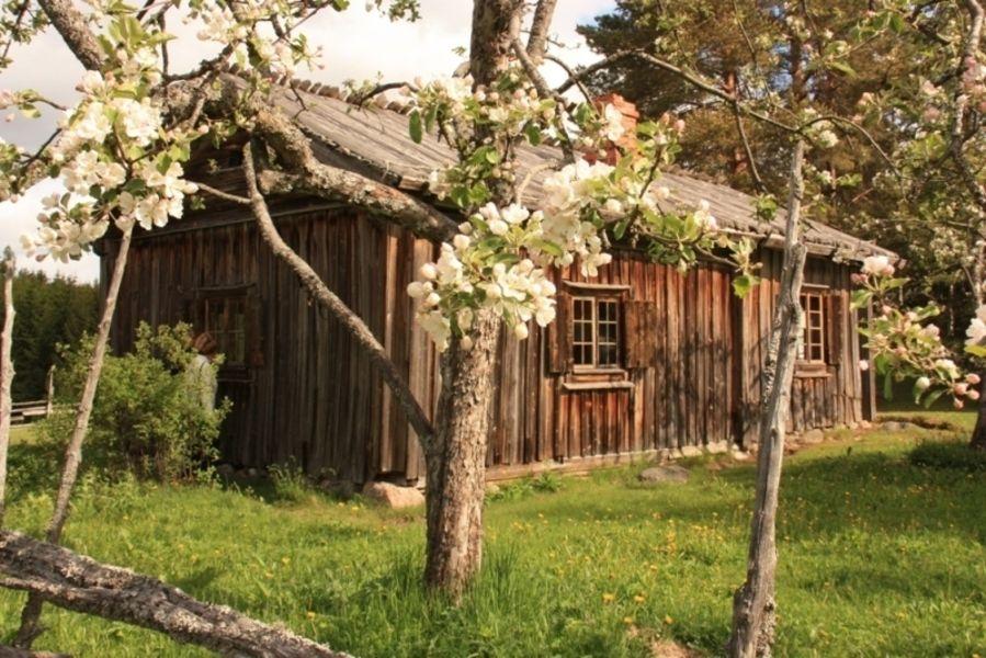 Дом Пайккари