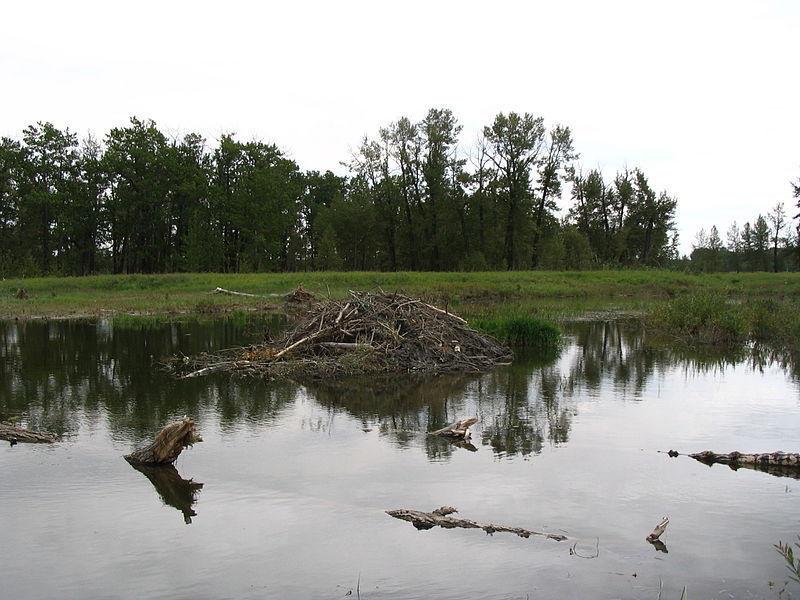 Провинциальный парк Фиш-Крик