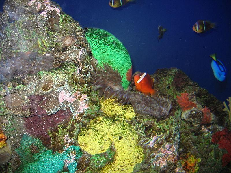 Американский аквариум