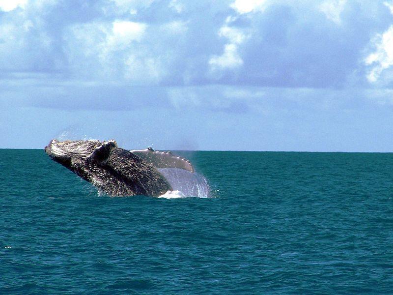 Национальный морской парк Аброльюс