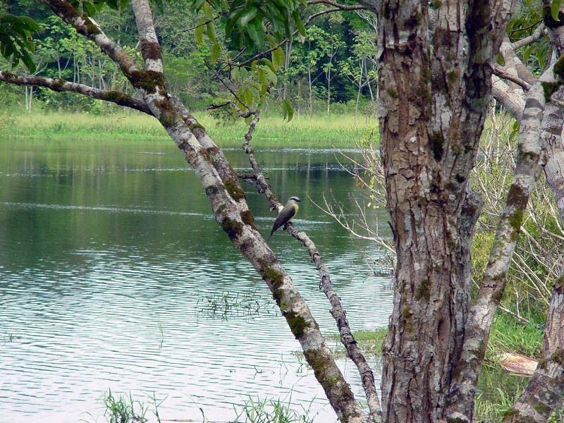 Озеро Мамори