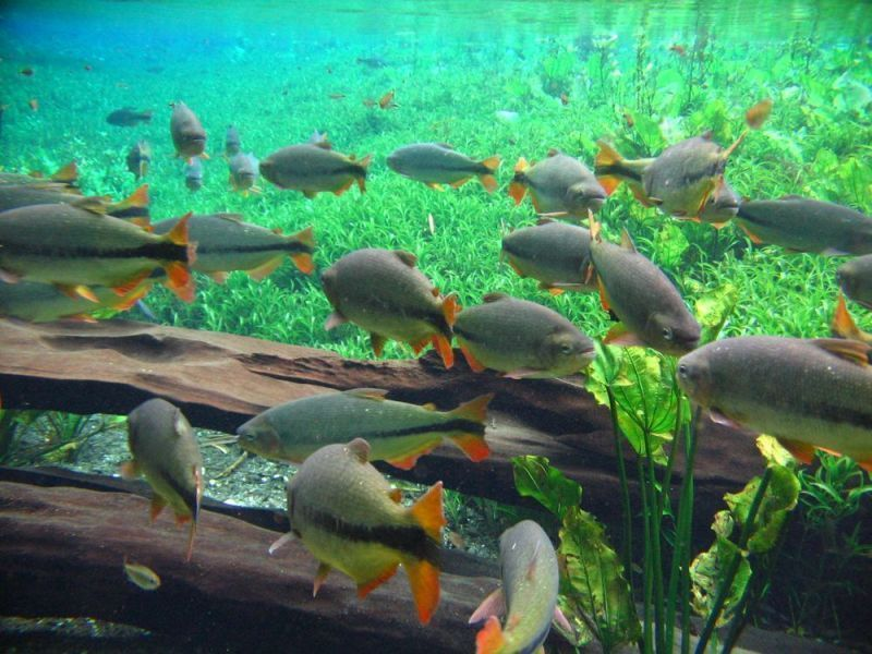 Природный аквариум Байя-Бунита