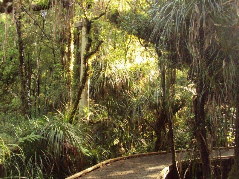 Уаипуа Форест-Парк