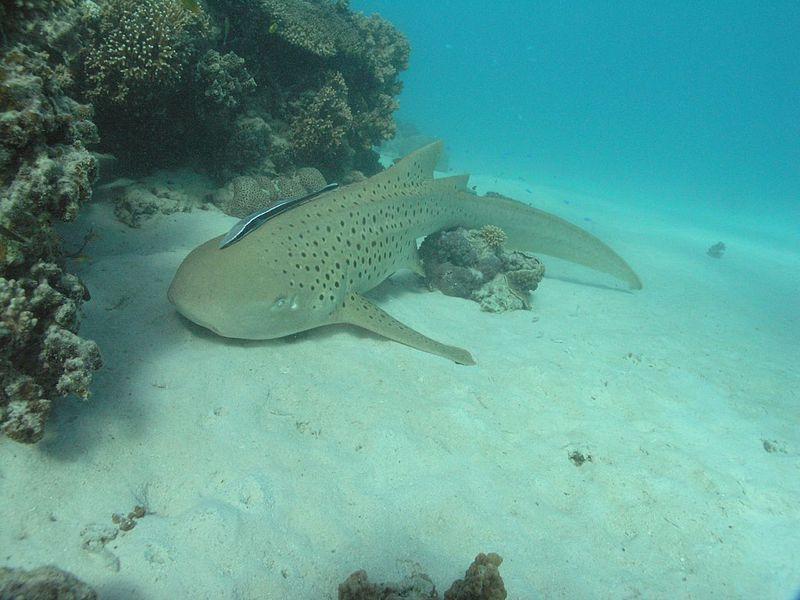 Морской парк риф Нингалу