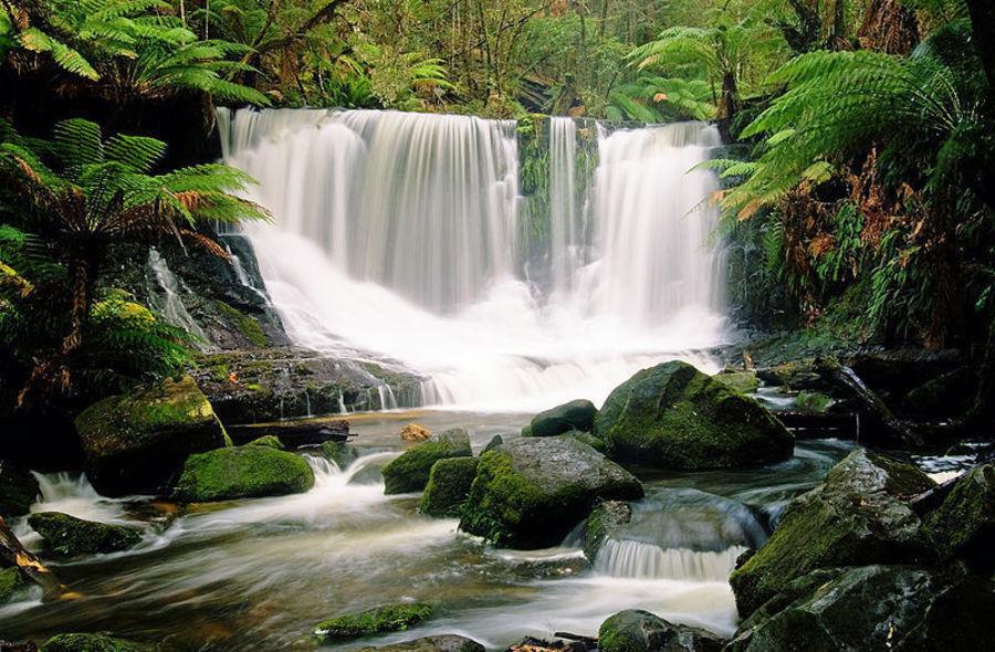 Национальный парк Маунт-Филд