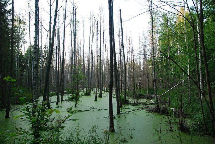 Государственный национальный парк и биосферный заповедник Беловежская Пуща