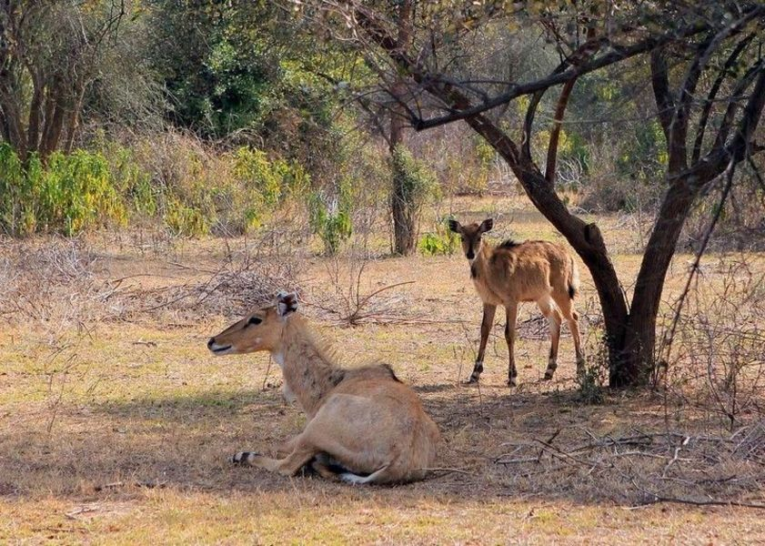Национальный парк Сариска