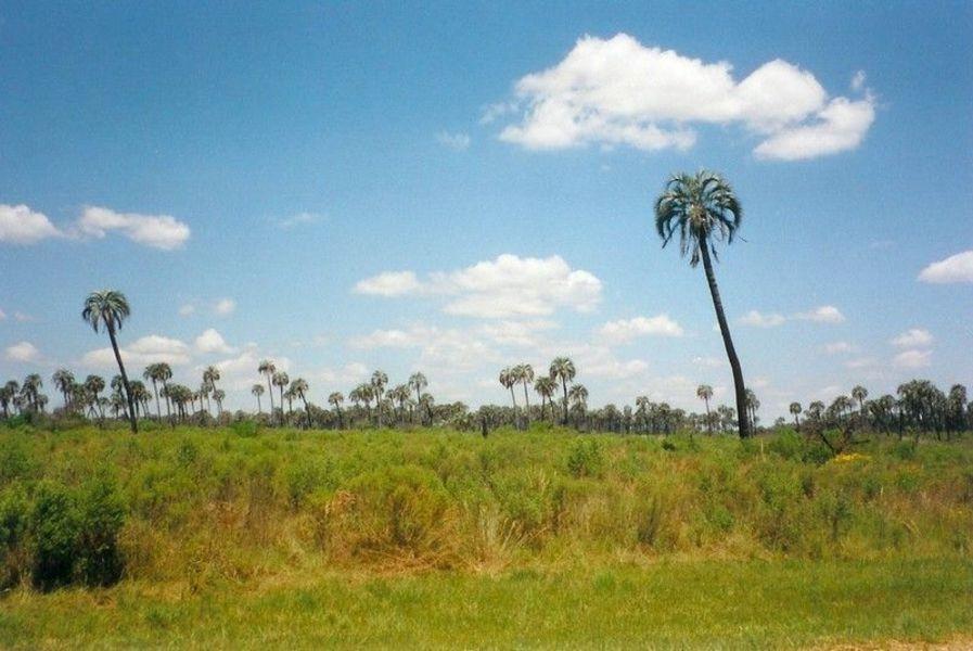 Национальный парк Эль-Пальмар