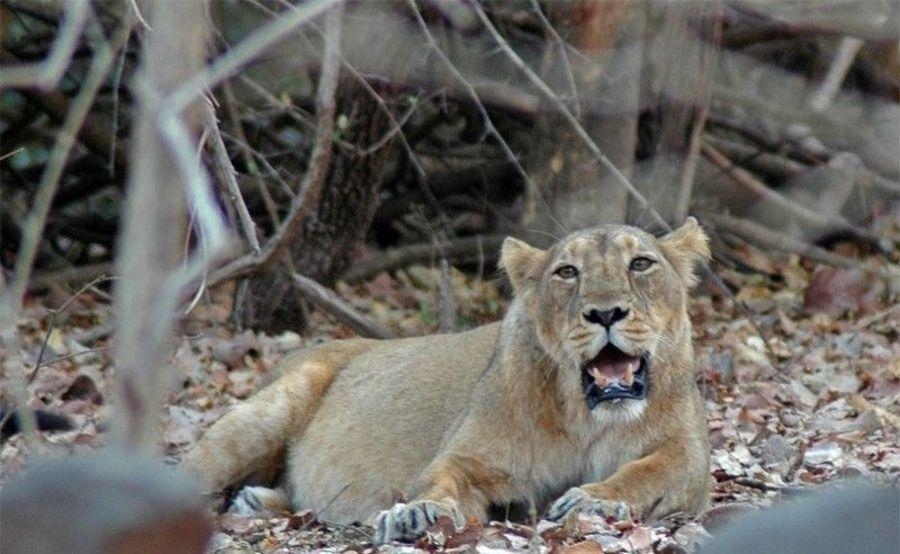 Национальный парк Сасангир