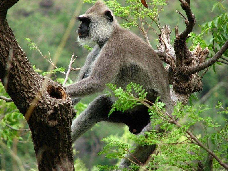Национальный парк Эравикулам