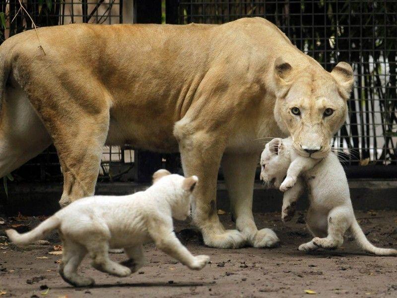 Зоопарк, Буэнос-Айрес