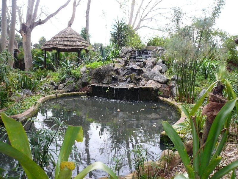 Тропические сады