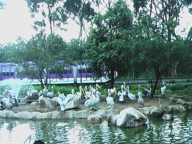 Парк птиц Джуронг