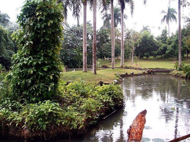 Ботанический сад, Санто-Доминго